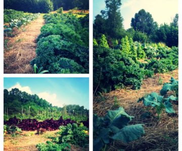 Get to Know Butchie's Organic Farm
