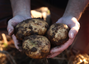 Butchie's Organic Farm Potatoes